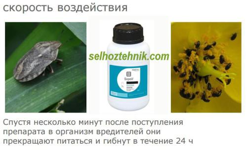 Инсектицид Борей